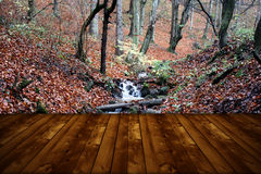 Wild forest and wooden floor Royalty Free Stock Images