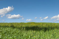 blue sky white clouds and grass Royalty Free Stock Images