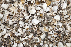 Wallpaper of shells Royalty Free Stock Photos