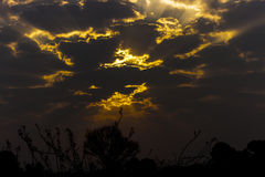 Wallpaper - Sunset. This is wallpaper sunset with the sky, making golden rays Royalty Free Stock Photo