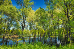 Wallpaper of trees in the swamp near Narew river,. Trees in the swamp. Flood waters of Narew river in Poland stock image
