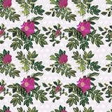 Wallpaper vintage rose pattern Stock Image