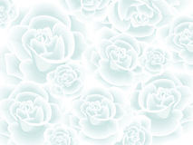 Wallpaper with white roses Royalty Free Stock Photos