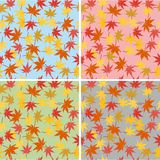 Wallpapers with maple leaves Stock Photo