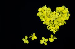 Close up  nature Yellow flower heart on black background  wallpeper texture stock photos