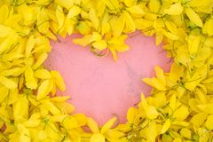 Wallpeper close up nature Yellow flower on pink background stock image