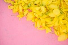 Wallpeper zamyka w górę natura Żółtego kwiatu na różowym tle obrazy royalty free