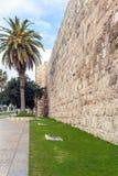 Walls of Ancient City and palm tree, Jerusalem Stock Photos