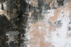 Walls covered with dust and mold Stock Photography