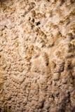 Walls covered with salt in  Salina Turda Salt Mine. Walls covered with salt in Salt Mine Gallery View Salina Turda in Romania Royalty Free Stock Image