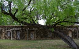 Walls, doors and Anacua trees in mission San Jose, Texas Stock Photos