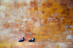 Walls of Jodhpur Fort, Rajasthan, India. Couple of pigeons sitting on the Jodhpur Fort wall Royalty Free Stock Photos