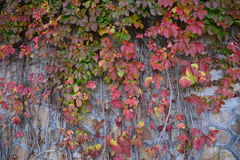 The walls of the leaves Stock Images