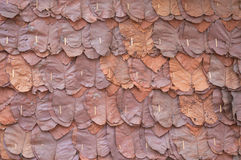 Walls made of teak leaves,close up background and texture Stock Photos