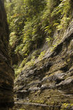 Walls of a river Canyon, Fijiian highlands Stock Photography