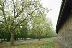 The walls of the Tiantan Park. Asia Travel Chinese Beijing Tiantan Park quiet corner, walls and trees Stock Photos