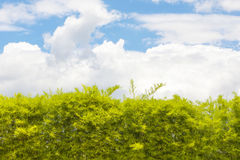 Blue sky with tree. Walls, trees and blue sky in the daytime. Illustration for background Stock Photography
