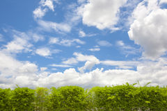 Blue sky with tree. Walls, trees and blue sky in the daytime. Illustration for background royalty free stock image