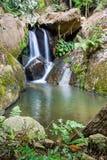 Wallterfall i rainforest Fotografering för Bildbyråer