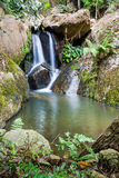 Waterfall in the rainforest. Waterfall from ravine in the rainforest Stock Image