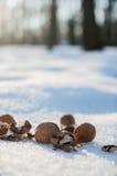 Walnüsse für Tiere im Park auf Winter Lizenzfreie Stockfotos
