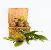 Walnüsse und Kastanien in einem Weidenkorb Stockfoto