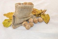 Walnüsse und trocknen Blätter in einer rustikalen Tasche auf einem weißen Hintergrund Stockfoto