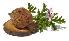 Walnuss und Pelargonie Stockfotos