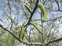 walnut Κοιλάδα του Fergana την άνοιξη Στοκ Φωτογραφία