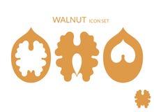 walnut Комплект значка иллюстрация вектора
