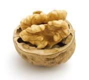 Walnut. On a white background Royalty Free Stock Image