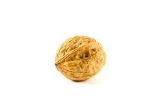 Walnut. Fruit of trees the genus Juglans Royalty Free Stock Photo
