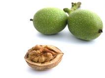 Walnut. Fresh walnuts on white background stock images