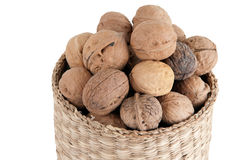 Walnut. With almond, cashew, hazelnut, together with the four nuts side by side for the world Royalty Free Stock Image