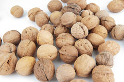 Walnut. With almond, cashew, hazelnut, together with the four nuts side by side for the world Stock Photography