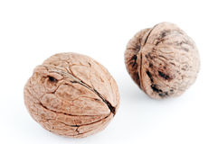 Walnut. With almond, cashew, hazelnut, together with the four nuts side by side for the world Royalty Free Stock Photos
