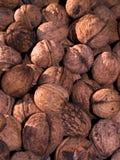 Walnut Stock Image