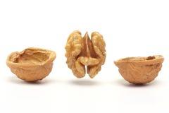Walnut. Ripe walnut against white background Royalty Free Stock Photography