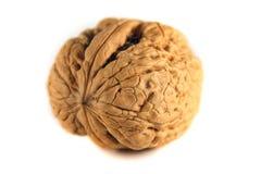 Walnut. Czech walnut on the white background Royalty Free Stock Photo