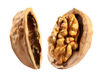 Free Walnut Stock Photo - 17513130