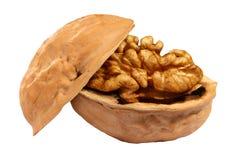 Walnut. The walnut on white background Royalty Free Stock Photos
