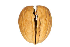 Walnut. Cracked walnut. Isolated over white Stock Image