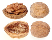 Walnut Stock Images