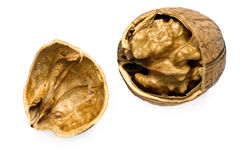 Walnut. Cracked walnut in its shell stock image