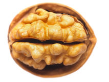Walnut. Close up of a walnut on white Royalty Free Stock Photos