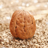 Walnut Stock Photo