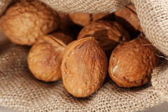 Walnut Royalty Free Stock Photos
