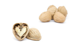 Walnut. S contained a  in the autumn season stock photos