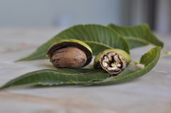 Walnut. Still life from the whole walnut and split Royalty Free Stock Photography