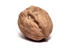 Walnut. A walnut isolated on white Royalty Free Stock Image